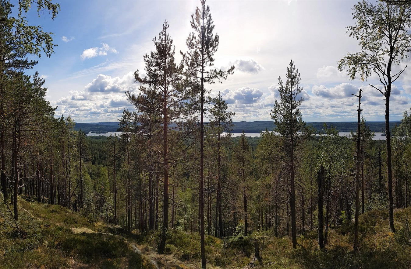 A scenery from a forested hill towards a distant lake.