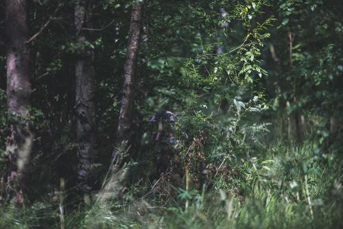 Snigel Design Ghillie Cloak 14. Kneeling, photographed from approx. 15 m away.