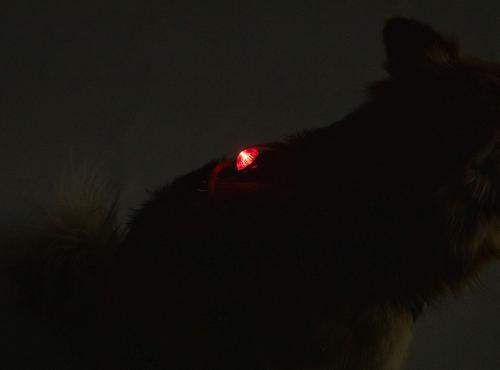 Adventure Lights, Guardian, Hunting Dog Light, Red.